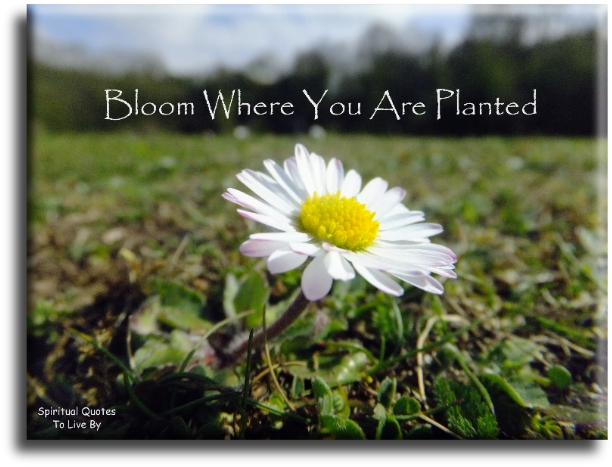 Bloom where you are planted (unknown) - Spiritual Quotes To Live By